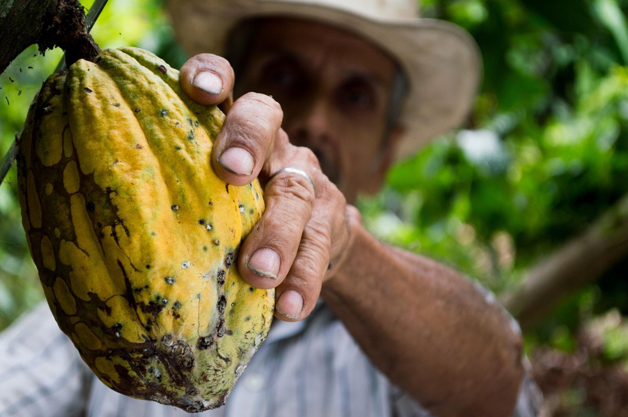 Il cioccolato Altromercato: dalla fava di cacao alle tavolette da gustare