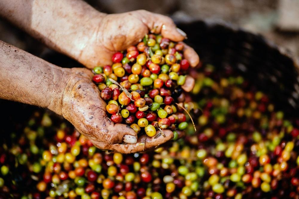 Il prezzo del caffè